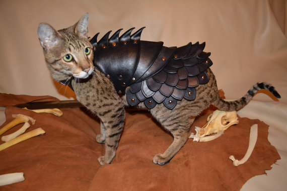 cute cat leather larp armour game of thrones