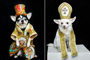 Guy makes elaborate Met Gala costume replicas — for his dogs