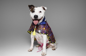 Battersea Auctions Luxury Couture Dog Costumes