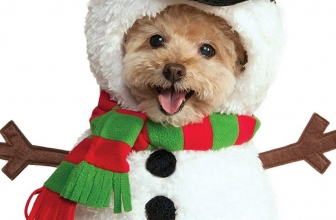 Christmas Pet Costumes – Is It Right?